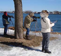 Winter Waterfowl Survey